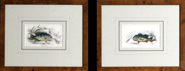 "William Home Lizars (1788-1859), ""Cychla"