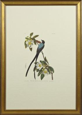 "John James Audubon (1785-1851), ""fork-tailed"