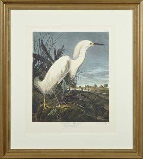 """John James Audubon (1785-1851), """"snowy Heron Or White"""