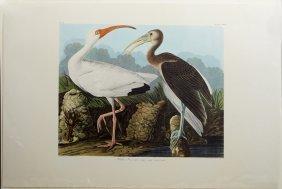 """John James Audubon (1785-1851), """"white Ibis,"""" No. 45,"""