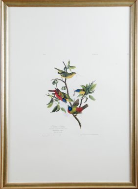 "John James Audubon (1785-1851), ""painted Bunting,"" No."
