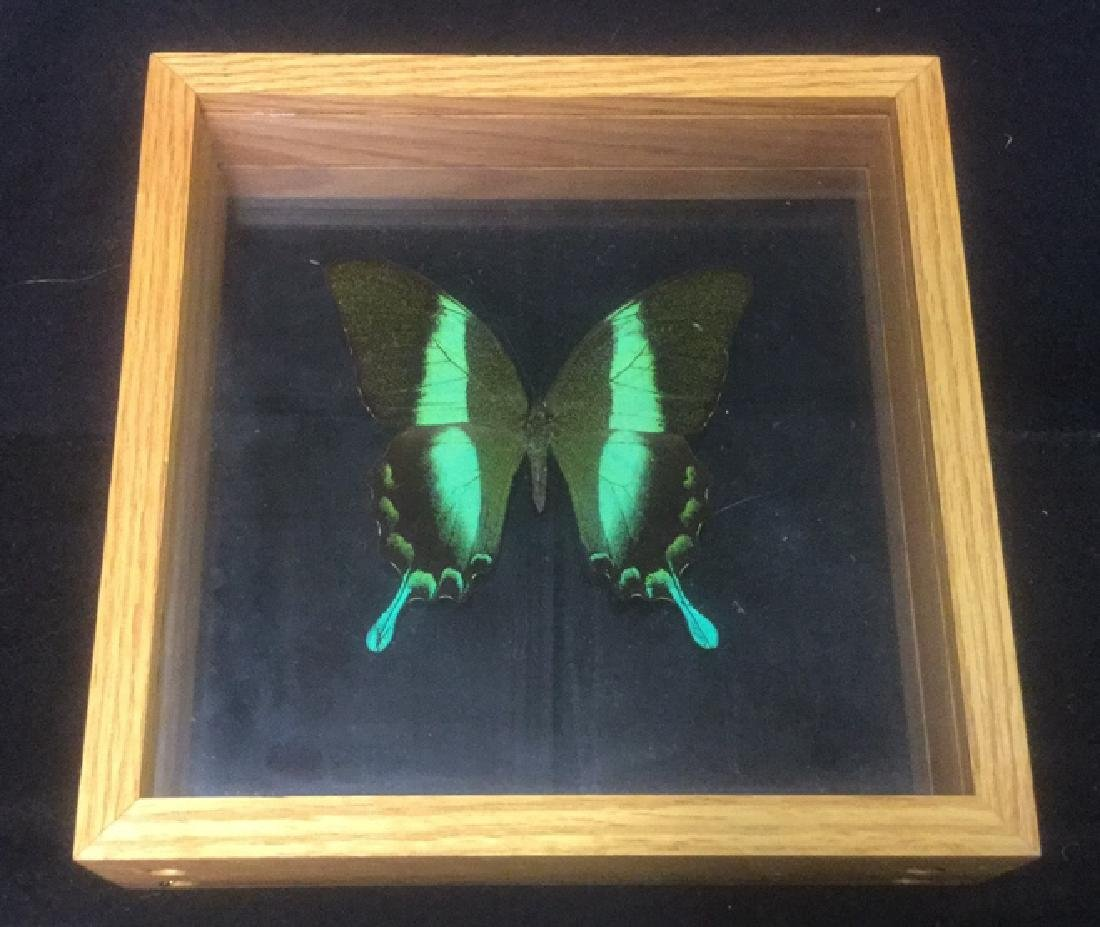 Vibrant Green Butterfly Encased in Wood Frame