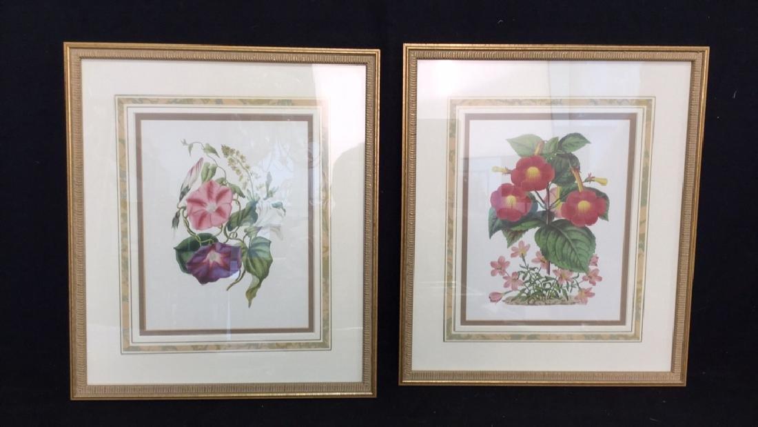 Pair  Framed Floral Botanical Prints