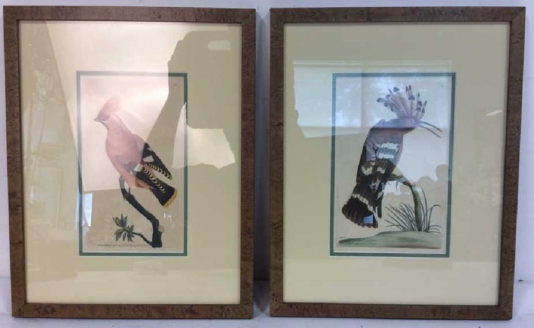 Lot 2 Framed BOHEMIAN CHALTEREE & HOOPOE