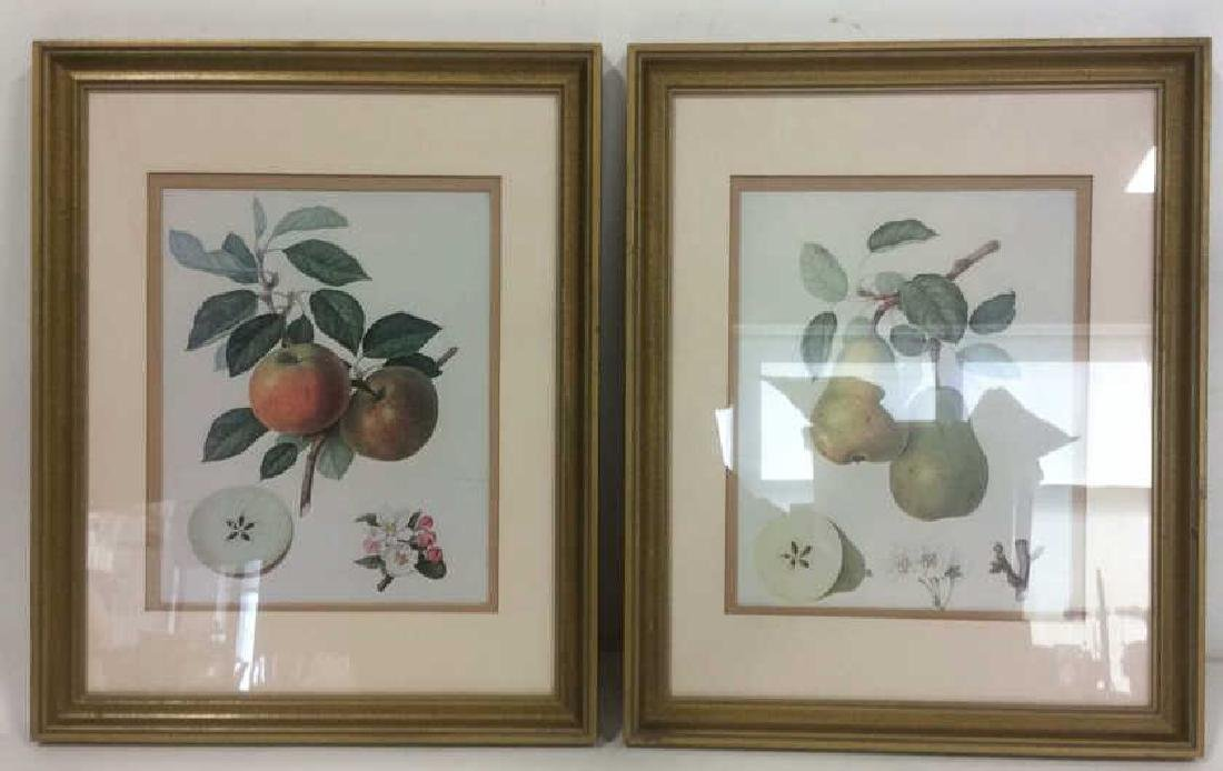 Lot 2 Framed Fruit Prints