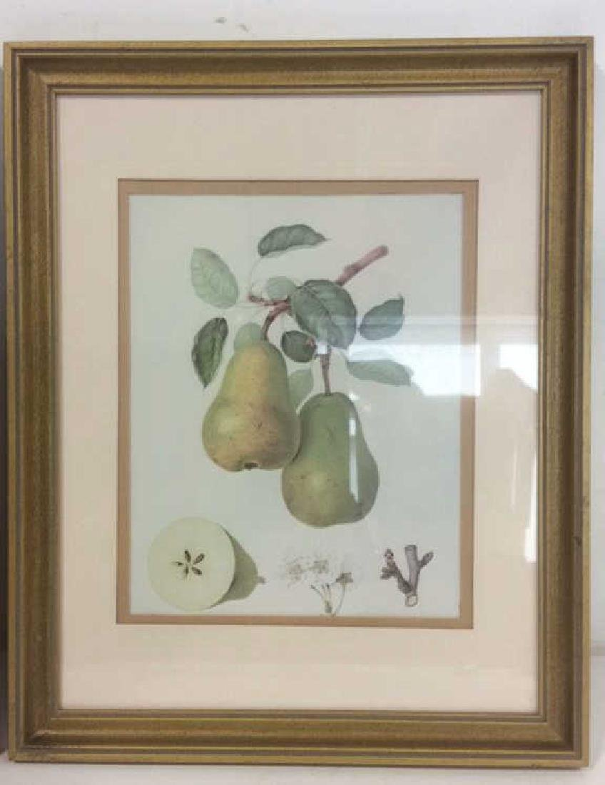 Lot 2 Framed Fruit Prints - 2