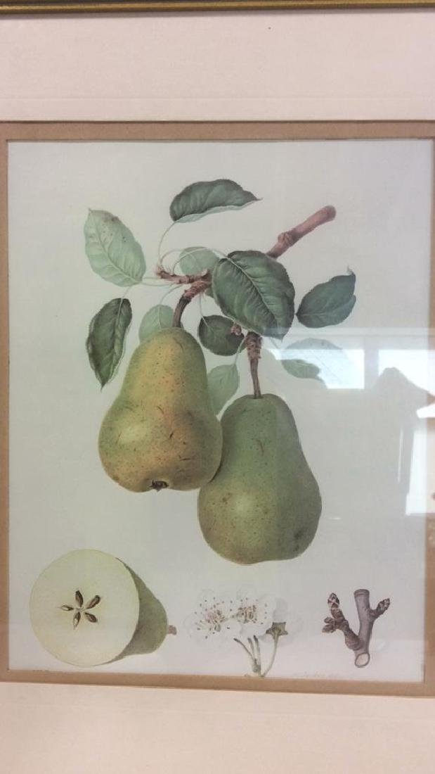 Lot 2 Framed Fruit Prints - 3