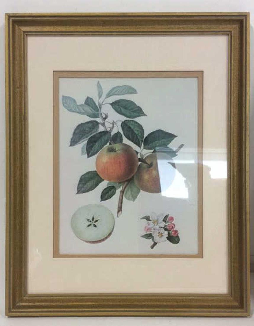 Lot 2 Framed Fruit Prints - 5