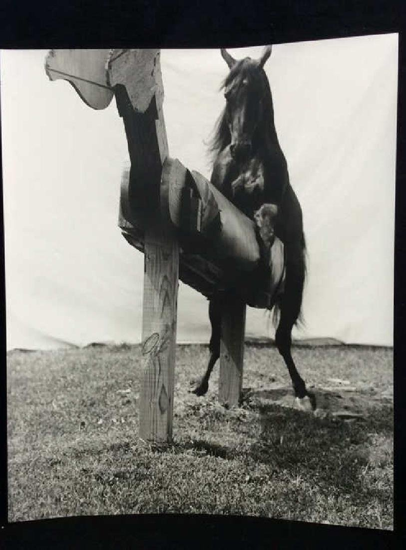 Photographic Print Live Horse W Wooden Horse