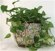 Philodendron W Oriental Inspired Floral Pot
