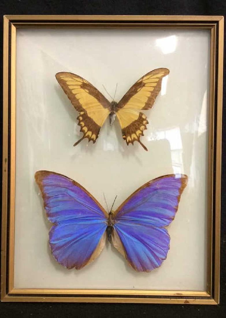 Preserved Mounted Butterfly Wall Art