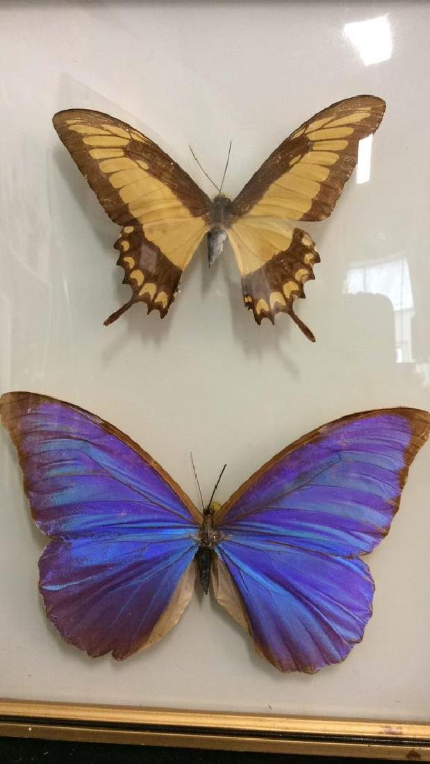 Preserved Mounted Butterfly Wall Art - 2