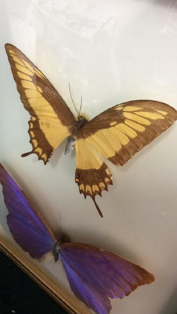 Preserved Mounted Butterfly Wall Art - 3