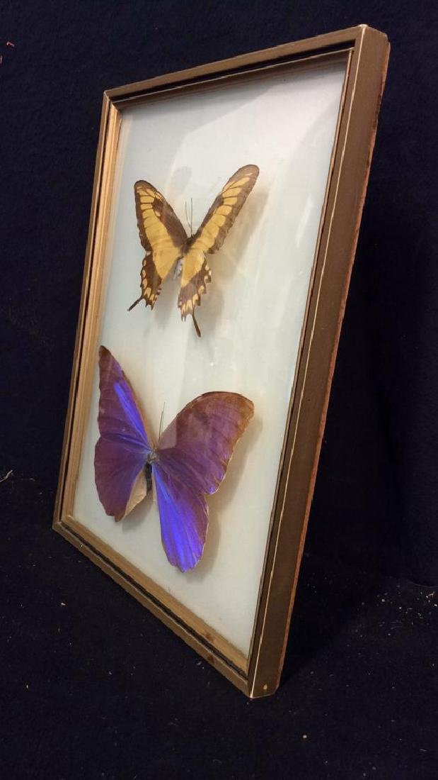 Preserved Mounted Butterfly Wall Art - 5