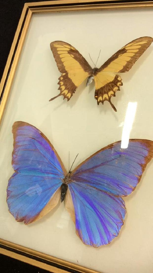 Preserved Mounted Butterfly Wall Art - 6
