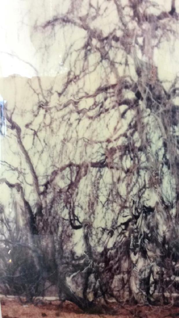 Pair Art Photographs c1980s - 8