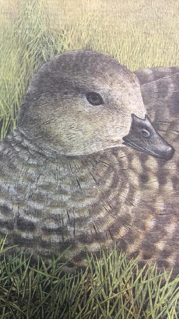 Lot 4 Ducks Of Sub-Sahara Africa Prints G. Darroll - 10