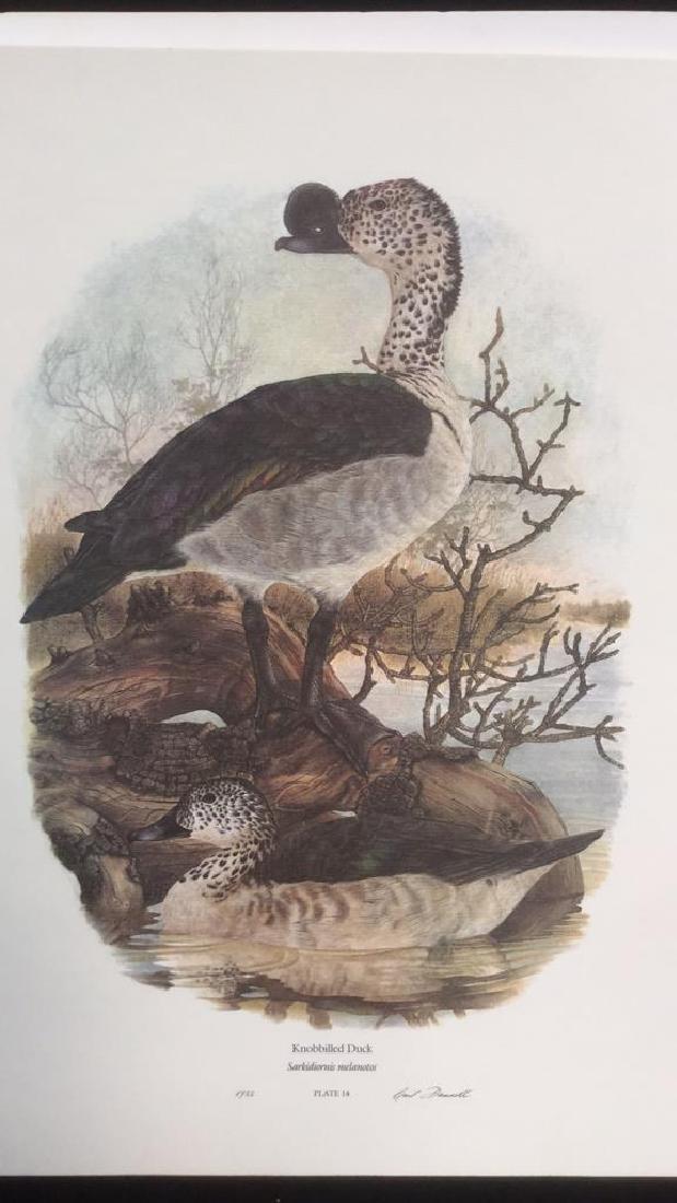 Lot 4 Ducks Of Sub-Sahara Africa Prints G. Darroll - 2
