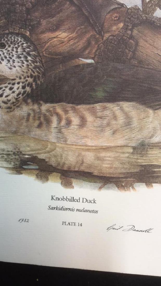 Lot 4 Ducks Of Sub-Sahara Africa Prints G. Darroll - 3