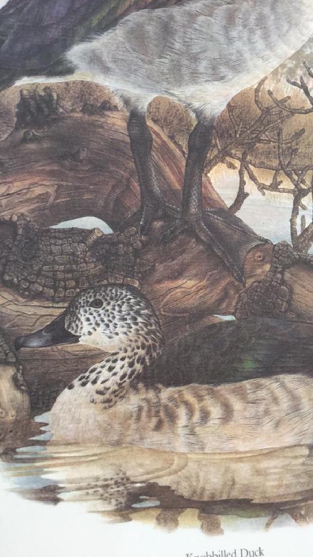 Lot 4 Ducks Of Sub-Sahara Africa Prints G. Darroll - 4