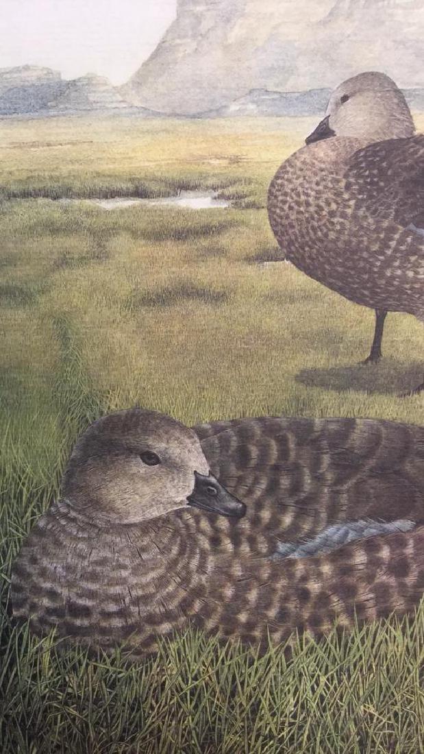 Lot 4 Ducks Of Sub-Sahara Africa Prints G. Darroll - 6