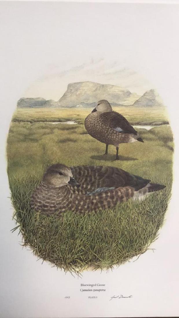 Lot 4 Ducks Of Sub-Sahara Africa Prints G. Darroll - 7