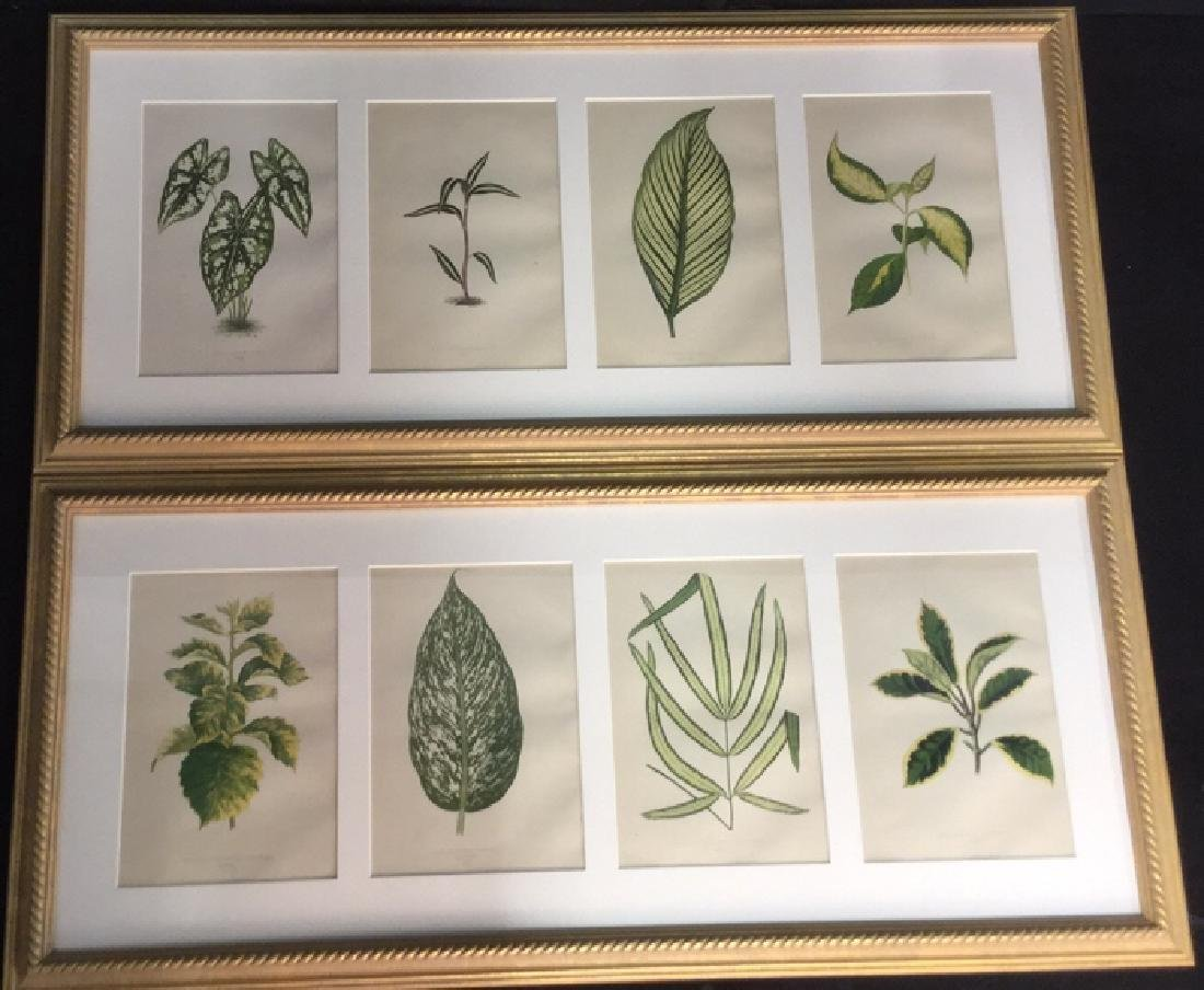 Pair Of Framed And Matted Leaf Prints