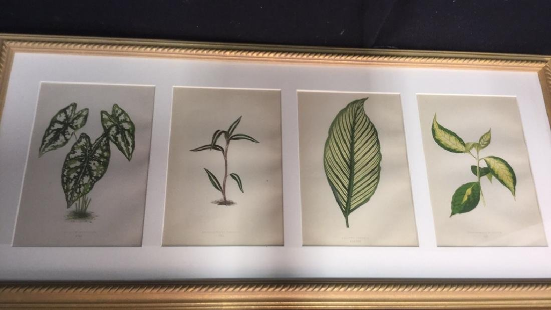 Pair Of Framed And Matted Leaf Prints - 3