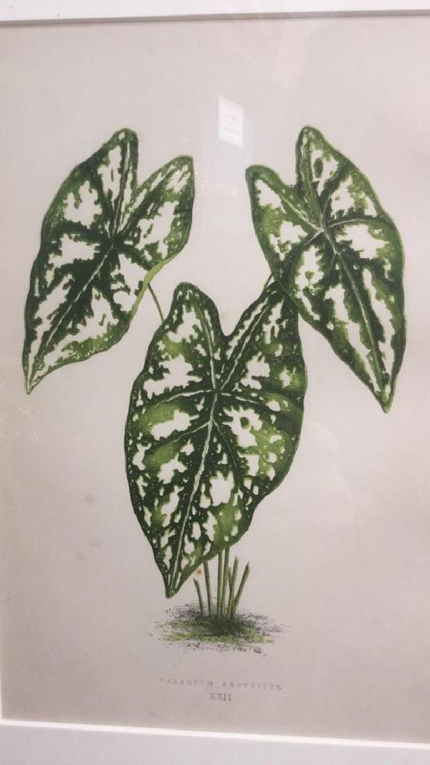 Pair Of Framed And Matted Leaf Prints - 4