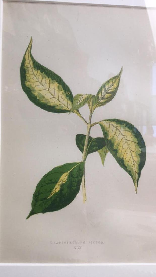 Pair Of Framed And Matted Leaf Prints - 7