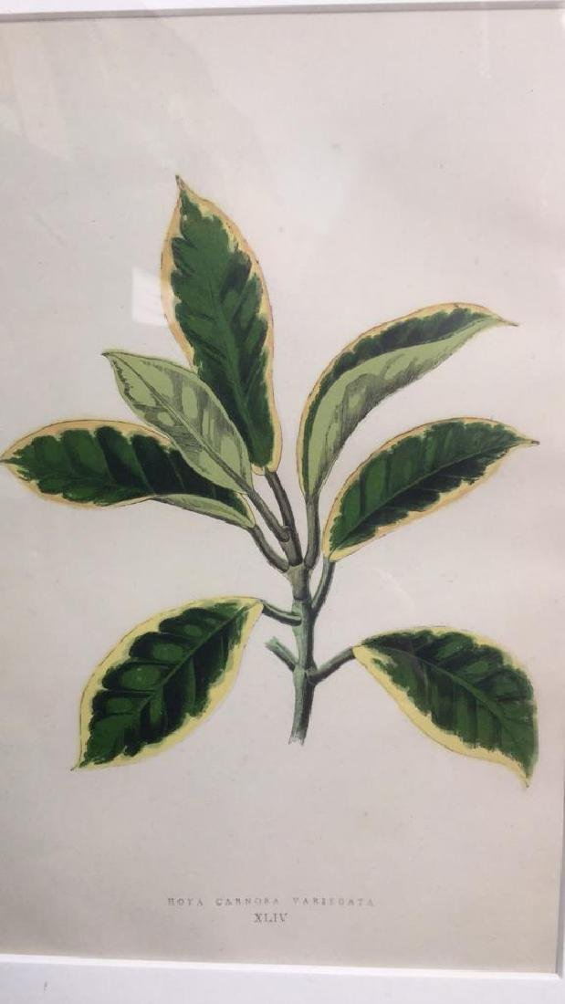 Pair Of Framed And Matted Leaf Prints - 9