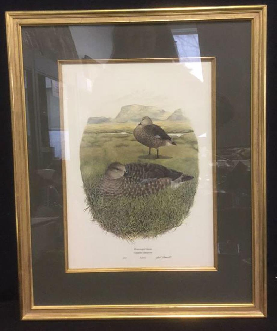 Framed Print Bluewinged Goose By Gail Darroll