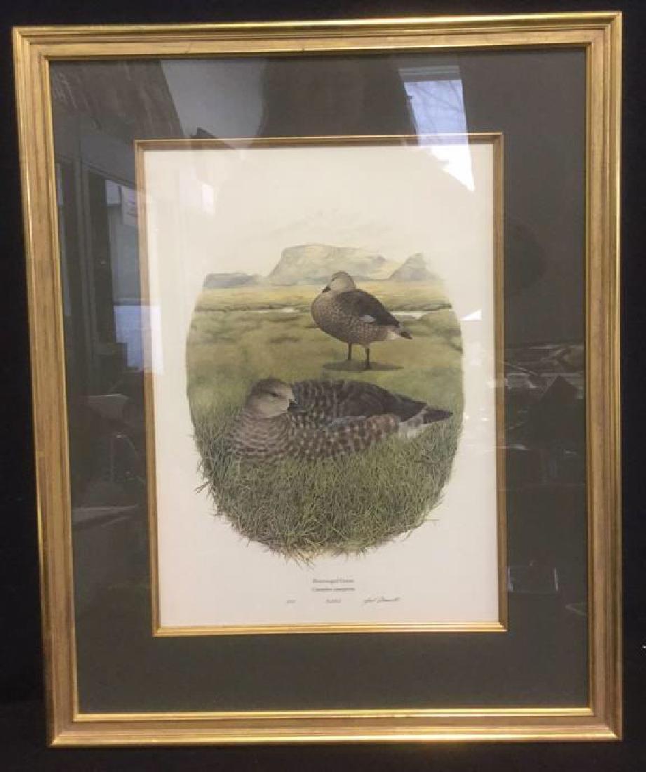 Framed Print Bluewinged Goose By Gail Darroll
