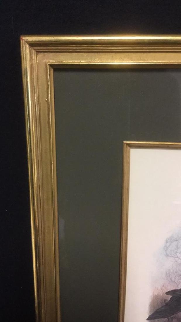 Framed Print Knobbilled Duck By Gail Darroll - 4