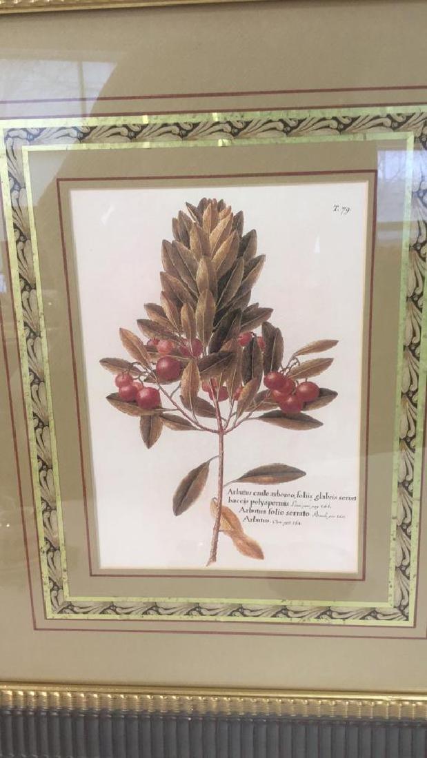 Pair Of Intricately Framed Botanical Prints - 2
