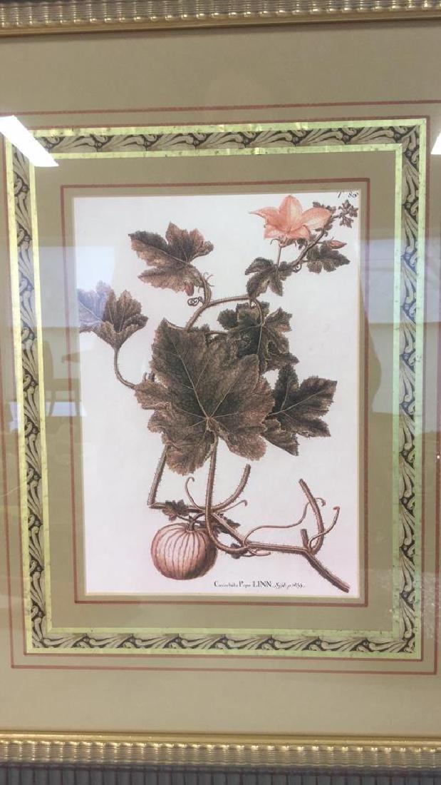 Pair Of Intricately Framed Botanical Prints - 3