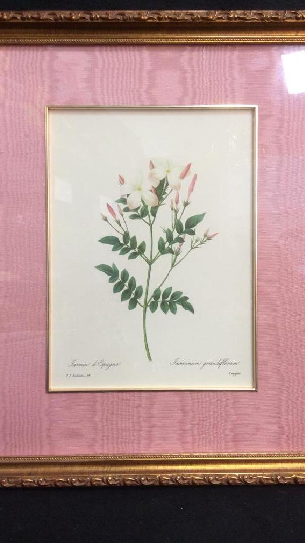 P.J. REDOUTE Print Of Jasminum Grandifforum - 2
