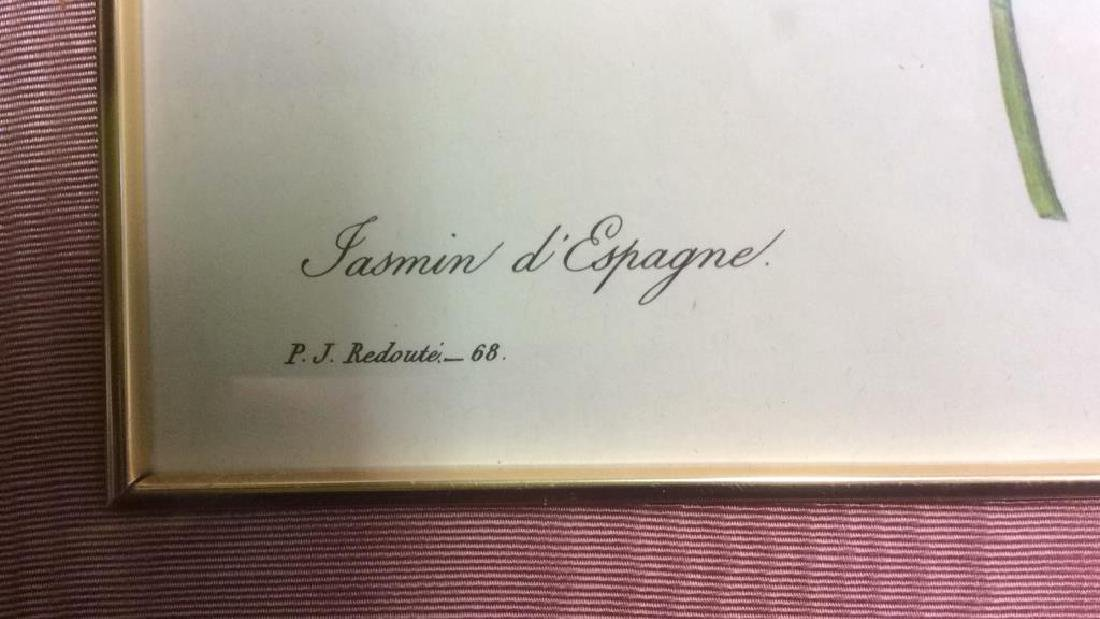 P.J. REDOUTE Print Of Jasminum Grandifforum - 5