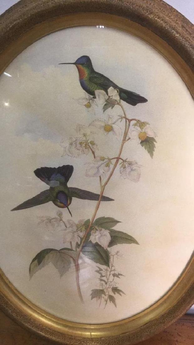 Framed Print Of Hummingbirds On Stemmed Flowers
