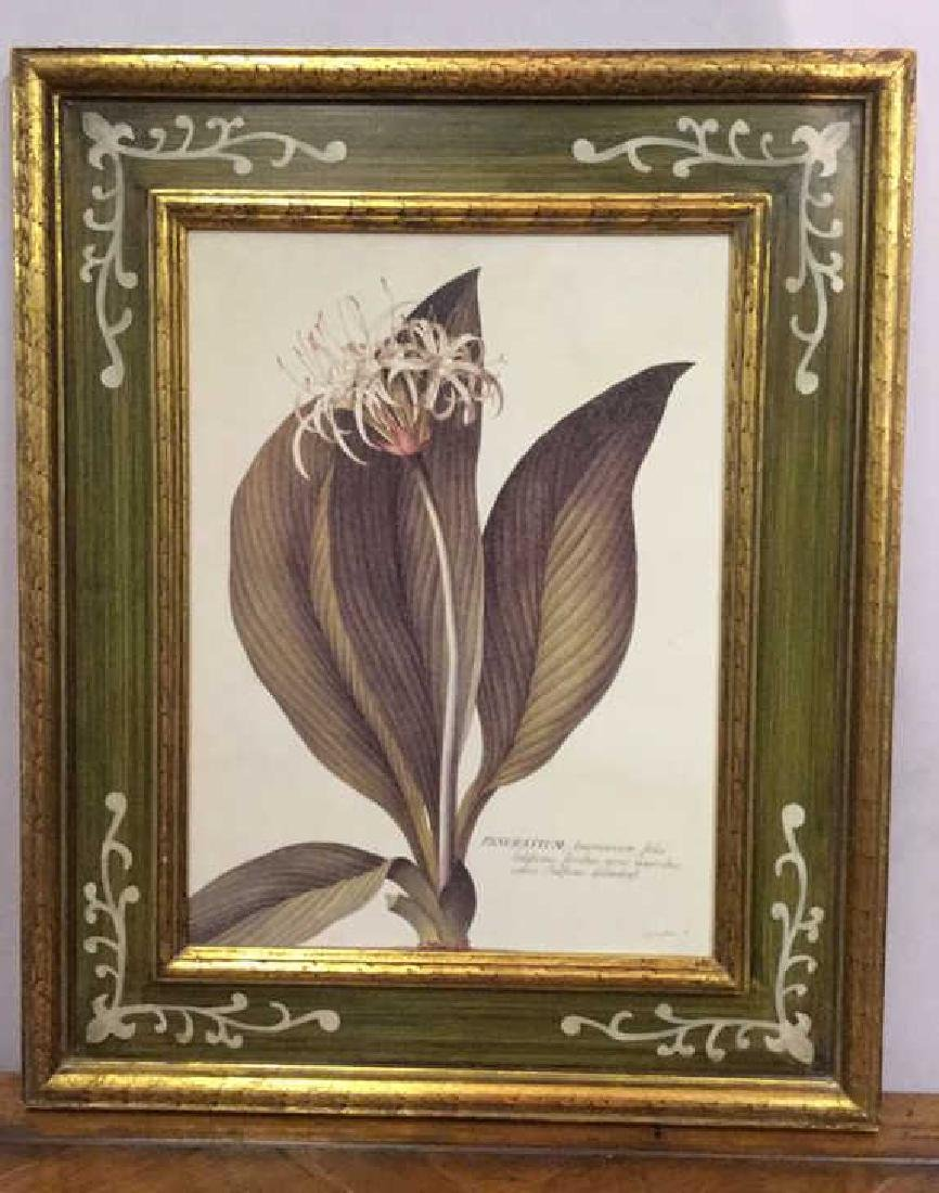 Gold Leafed and painted Framed Botanical Print