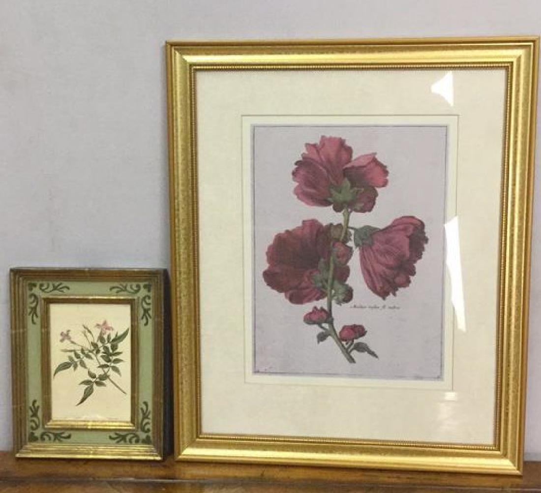 Lot 2 Framed Botanical Prints