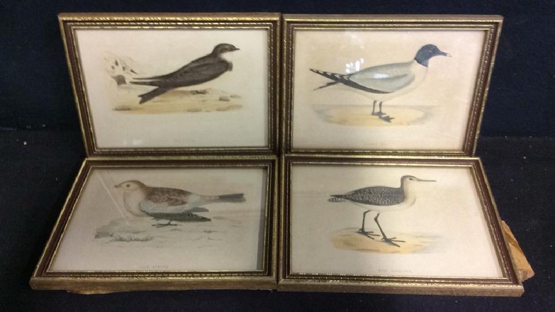 Lot 4 Assorted Framed Bird Prints