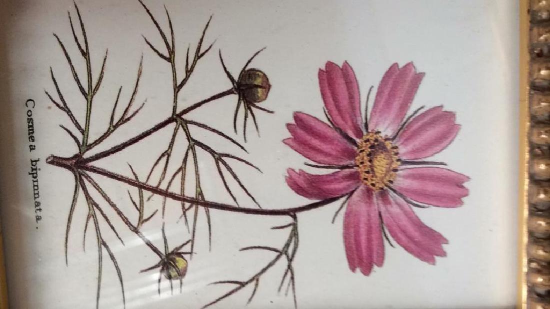 Lot 3 Framed Matted Decorative Floral Art Prints - 6
