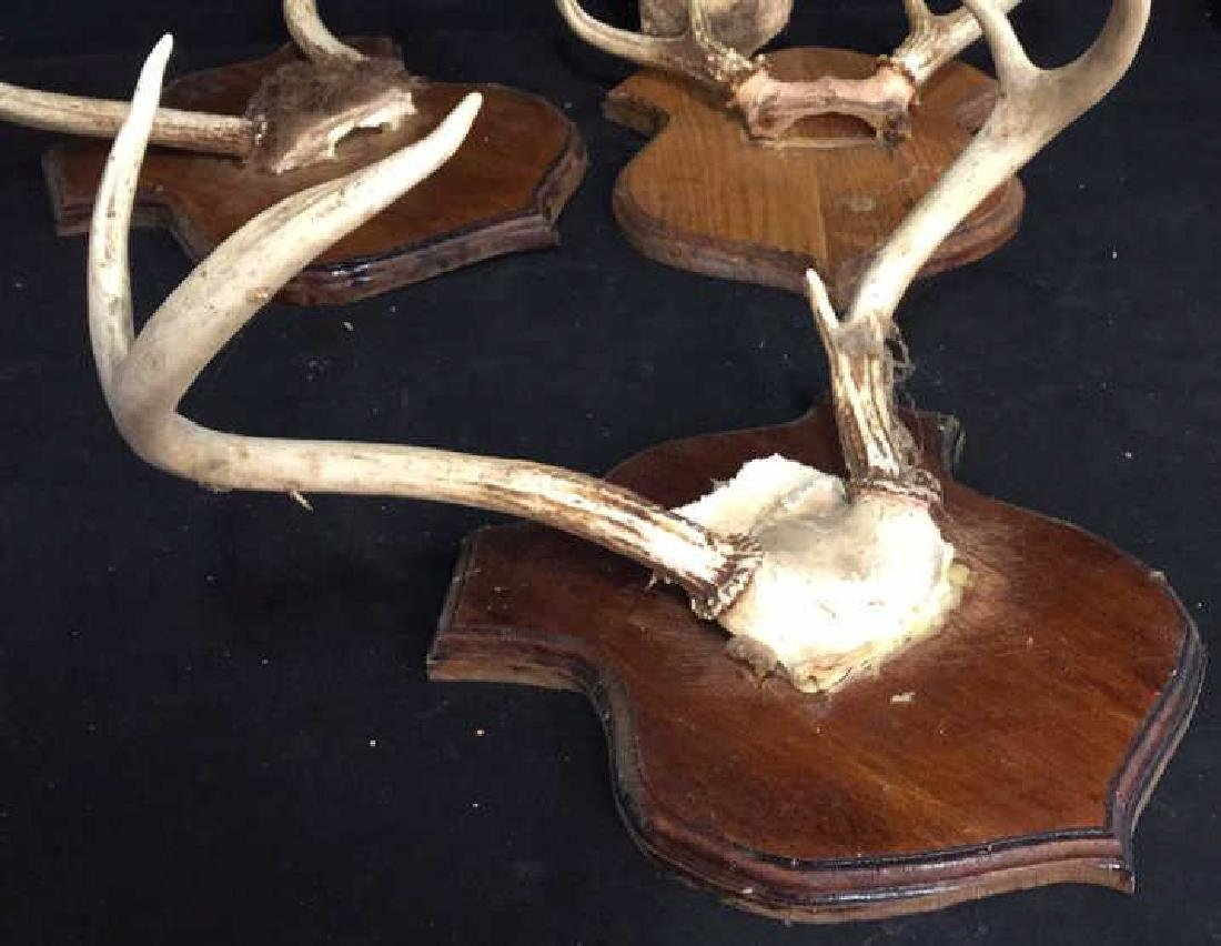 Group of Deer Antlers, 3 On Carved Displays - 3