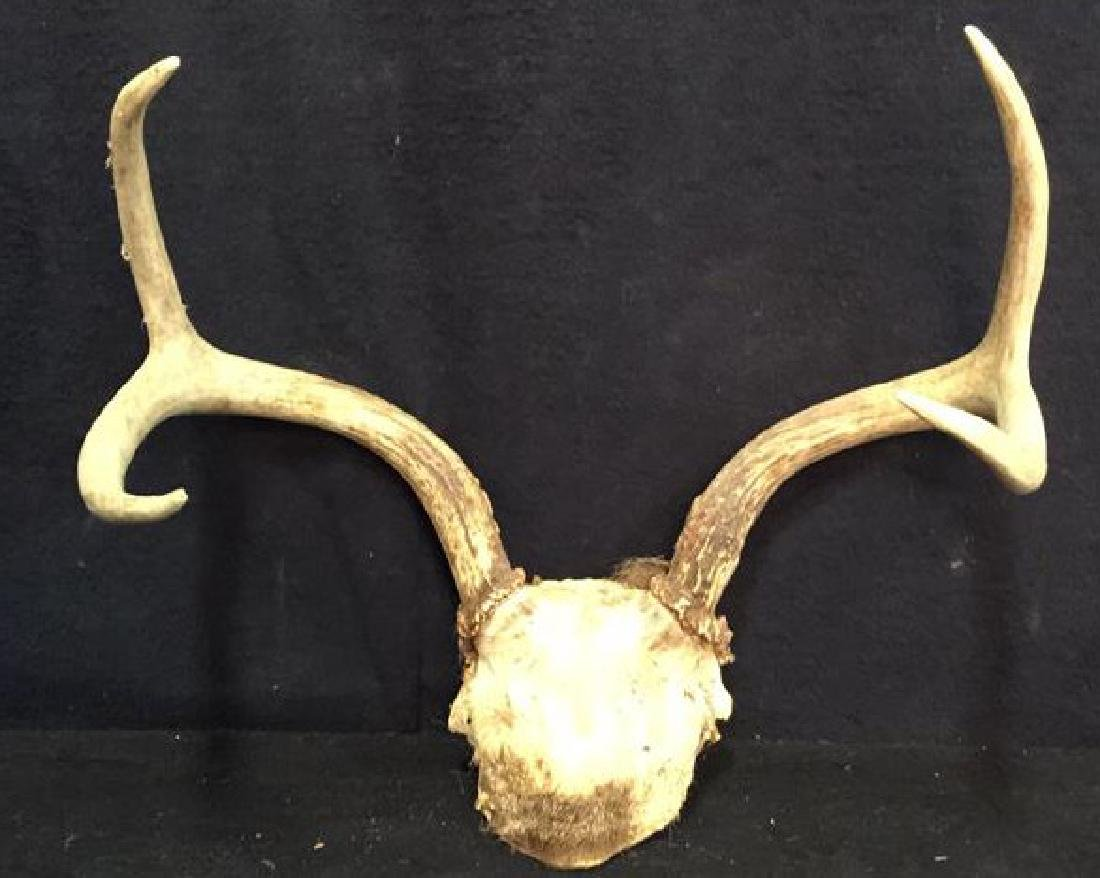 Group of Deer Antlers, 3 On Carved Displays - 6