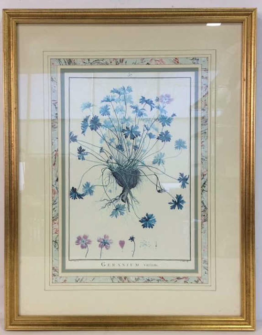 Framed GERANIUM VARIUM Print Artwork