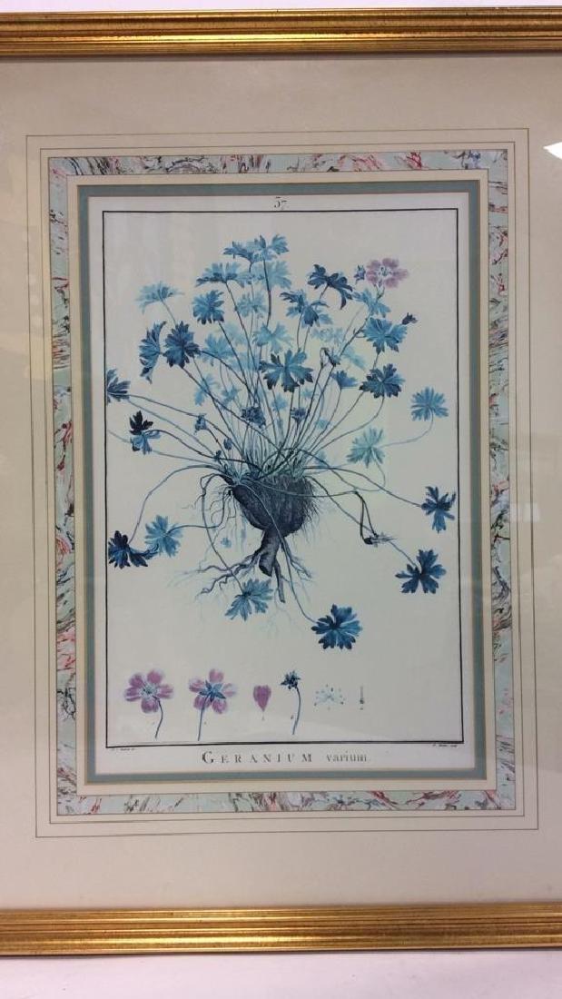 Framed GERANIUM VARIUM Print Artwork - 2