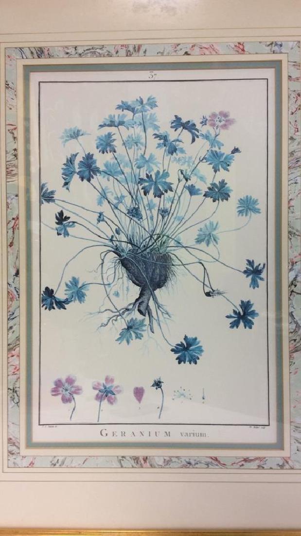 Framed GERANIUM VARIUM Print Artwork - 3