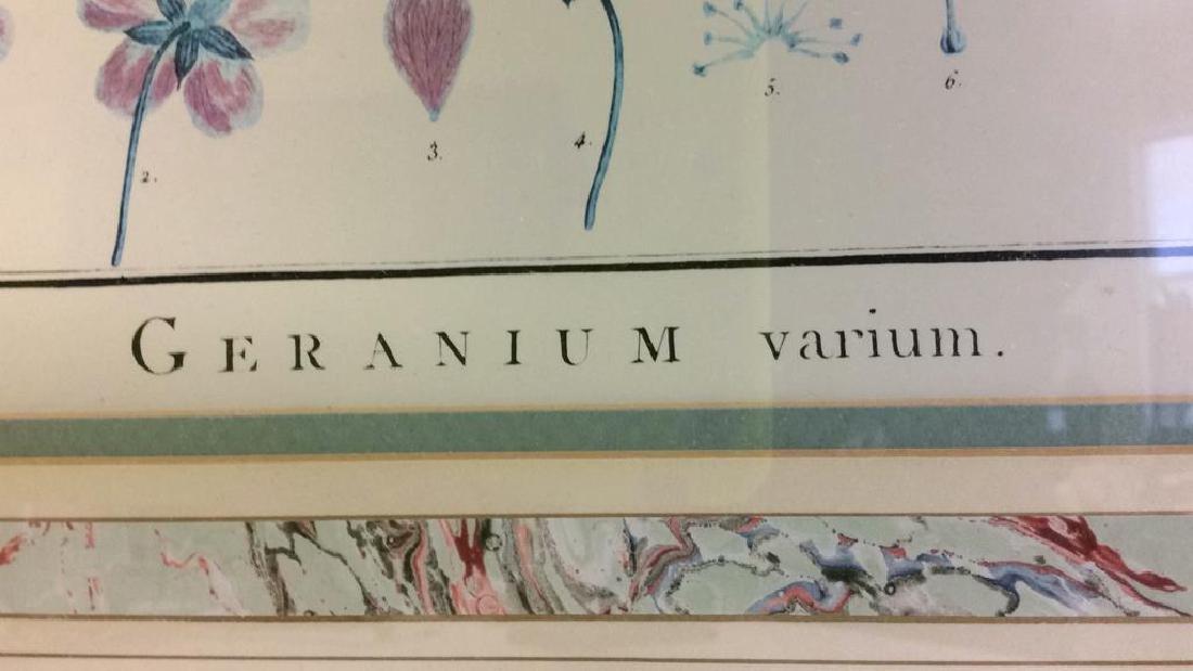 Framed GERANIUM VARIUM Print Artwork - 7