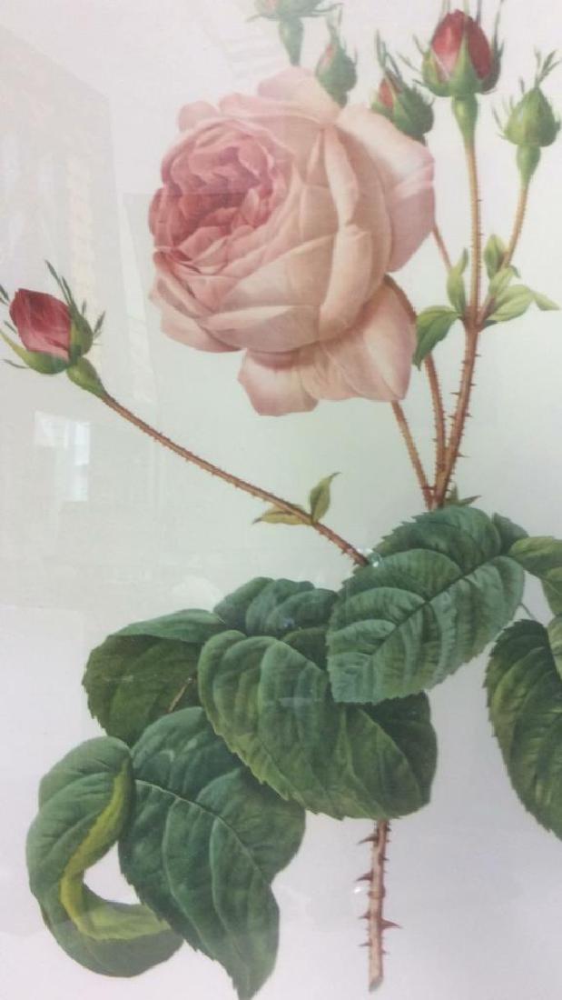 Lot 2 Framed & Matted Floral Prints - 4